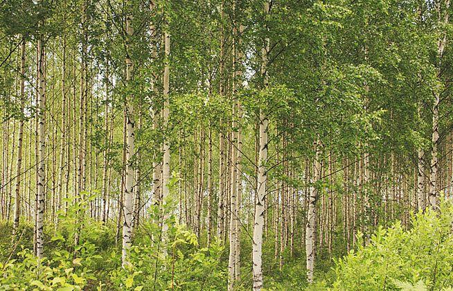Vacationtravelogue Shopping Scandinavian Nature Outdoor Plants