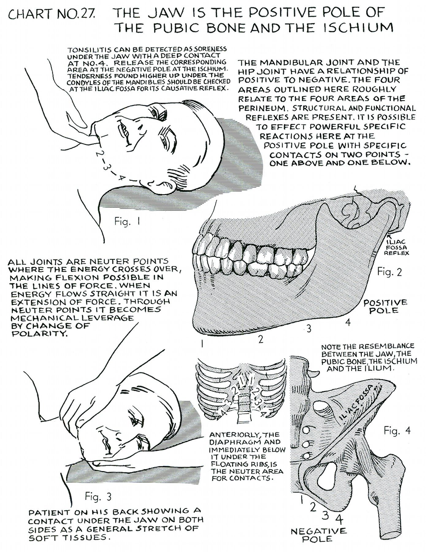 http://www.digitaldrstone.org/img/v1b2c27lg.jpg | spine nervous ...