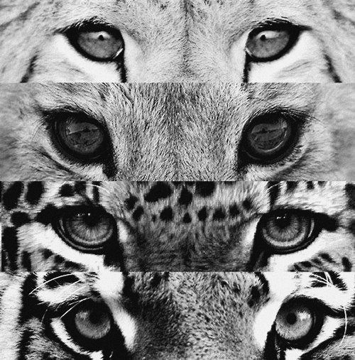 image animaux swag