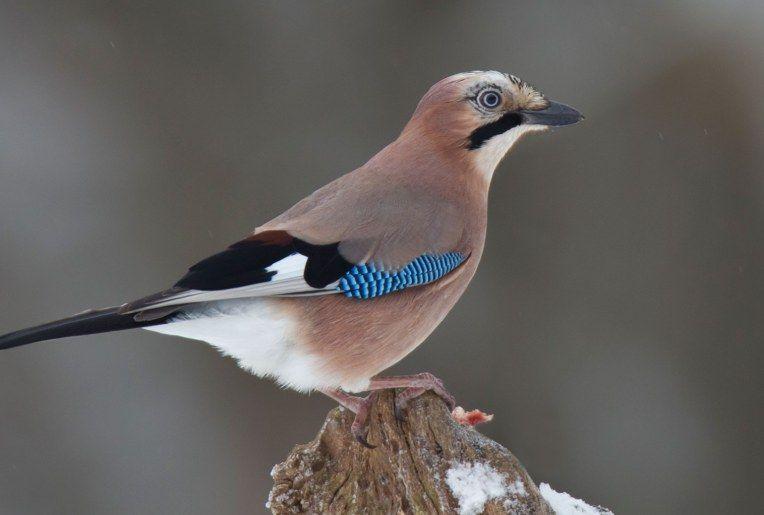 Die 25 Haufigsten Wintervogel Lbv Gemeinsam Bayerns Natur Schutzen Lbv In 2020 Vogel Im Garten Heimische Vogel Vogel Bestimmen