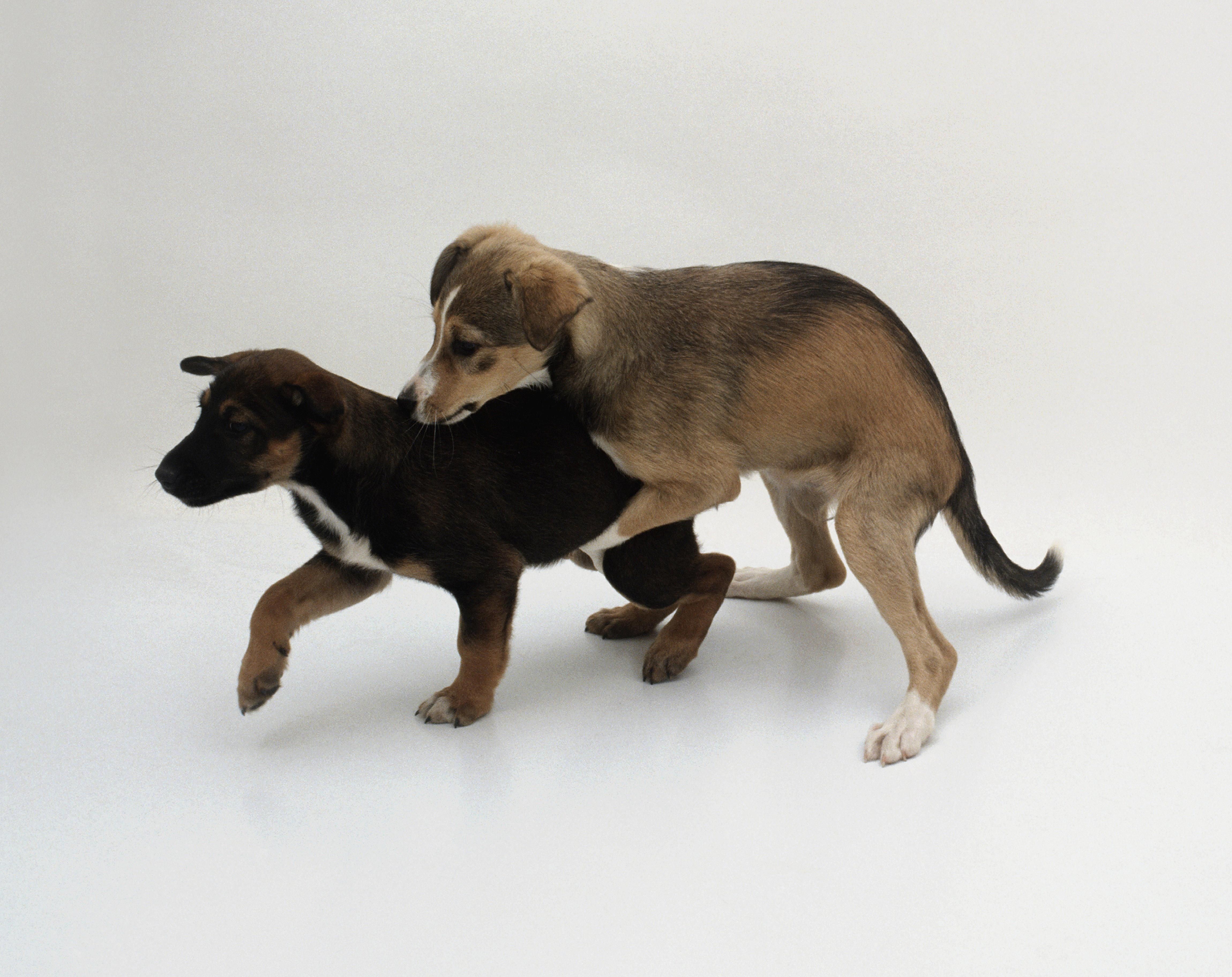 56a51f8f29cece565b2dc4be6f4842a2 - How To Get A Boy Dog To Hump You