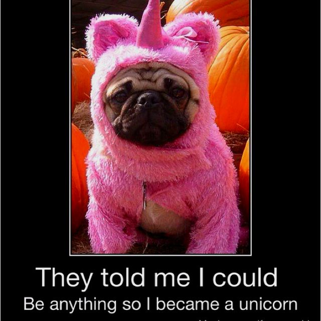 Pug Corn Pugs In Costume Cute Pugs Pugs