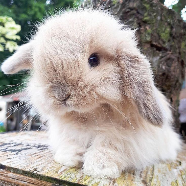 Ideas for bunny supplies, what do rabbits need? – #animals #Bunny #Ideas #rabbit…