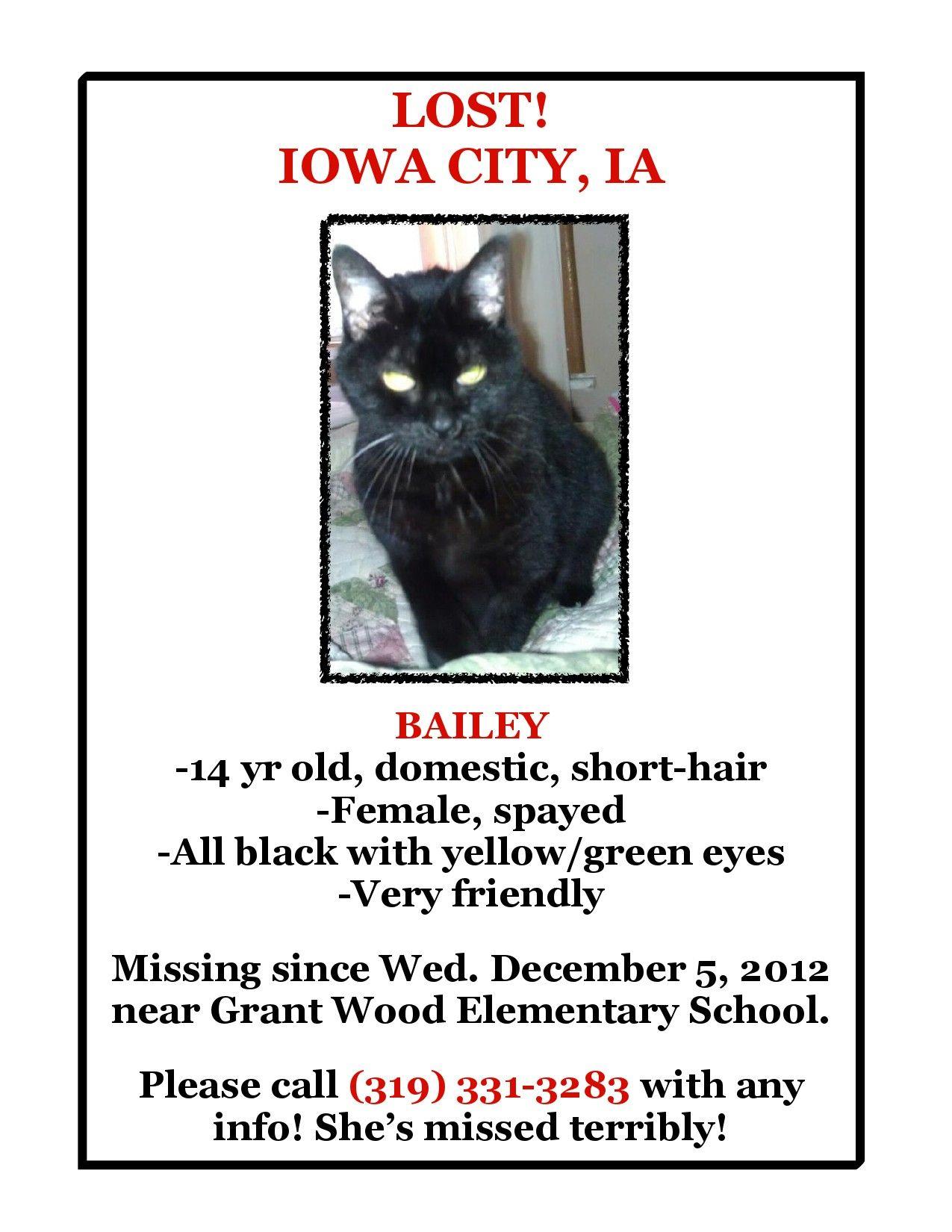 Lost cat in IowaCity IA! Bailey is an indoor cat, 14
