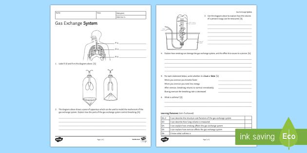 Ks3 Gas Exchange Homework Activity Sheet