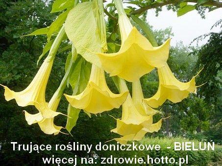 Pin On Rosliny Doniczkowe