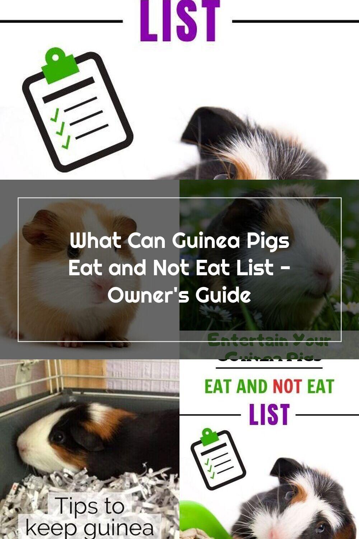 Pin Su Guinea Pig Care