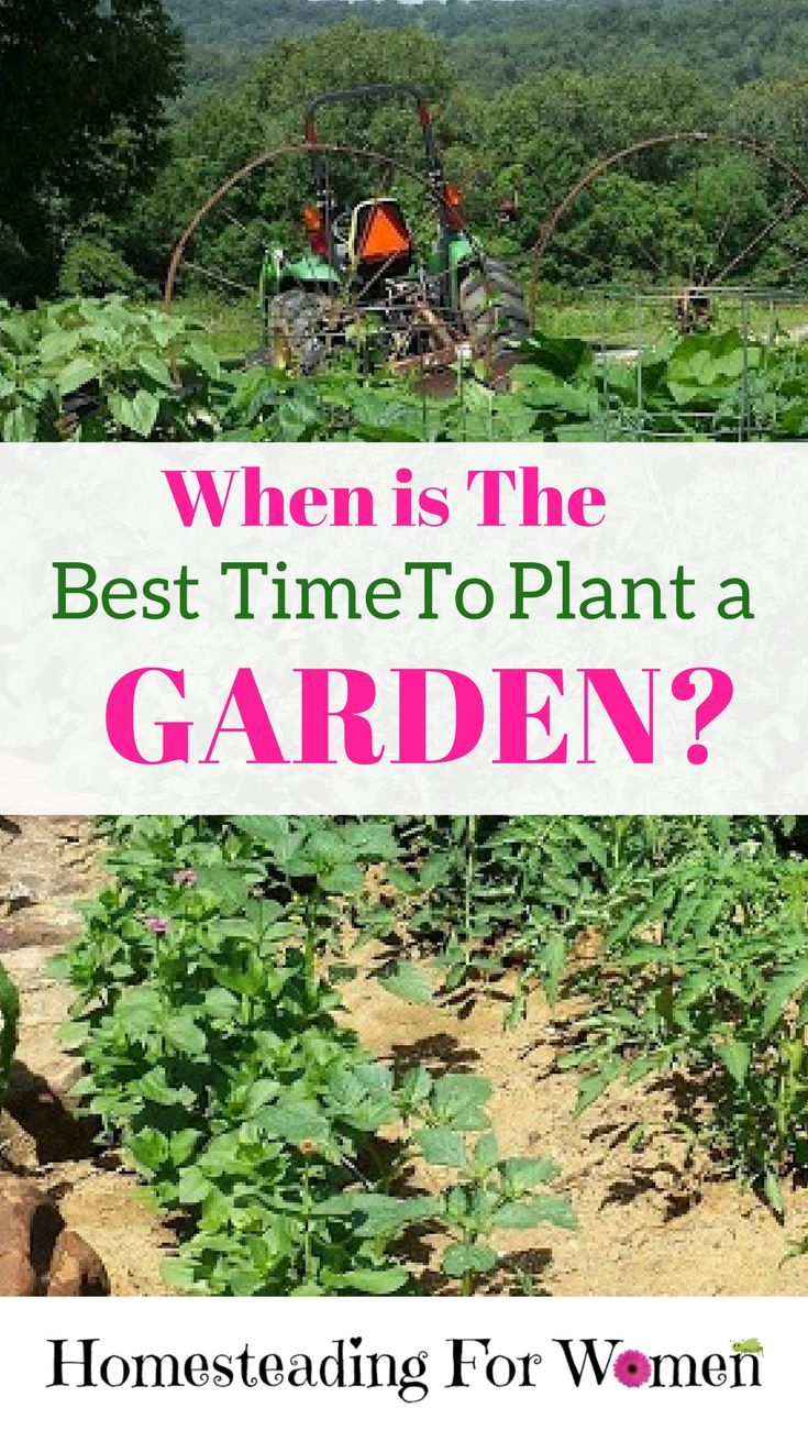 Bon Best Time To Plant A Garden