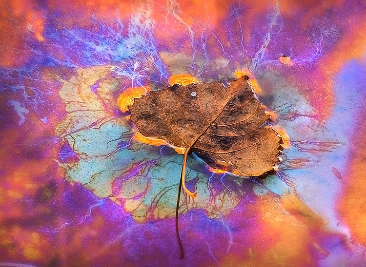 ~~ Eyes Can't Tell Us ~~ This is an abstract close-up of a fall leaf sitting atop an all-natural pool of plant oils with natural color reflecting off of them. ~~