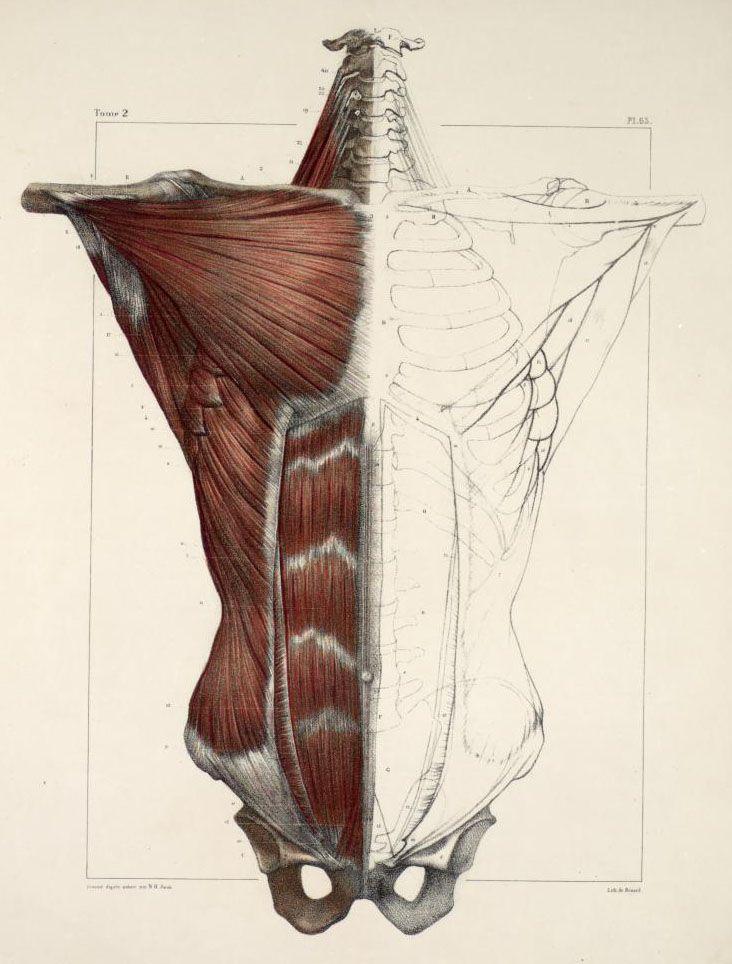 from the book: Traité complet de l\'anatomie de l\'homme | Anatomical ...