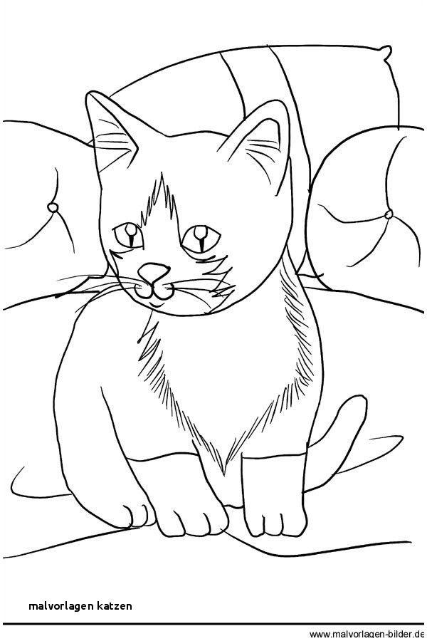 Ten Grossartig Katze Malvorlage Anschauung 2020 Ausmalbilder Zum Ausdrucken Ausmalbilder Malvorlage Katze