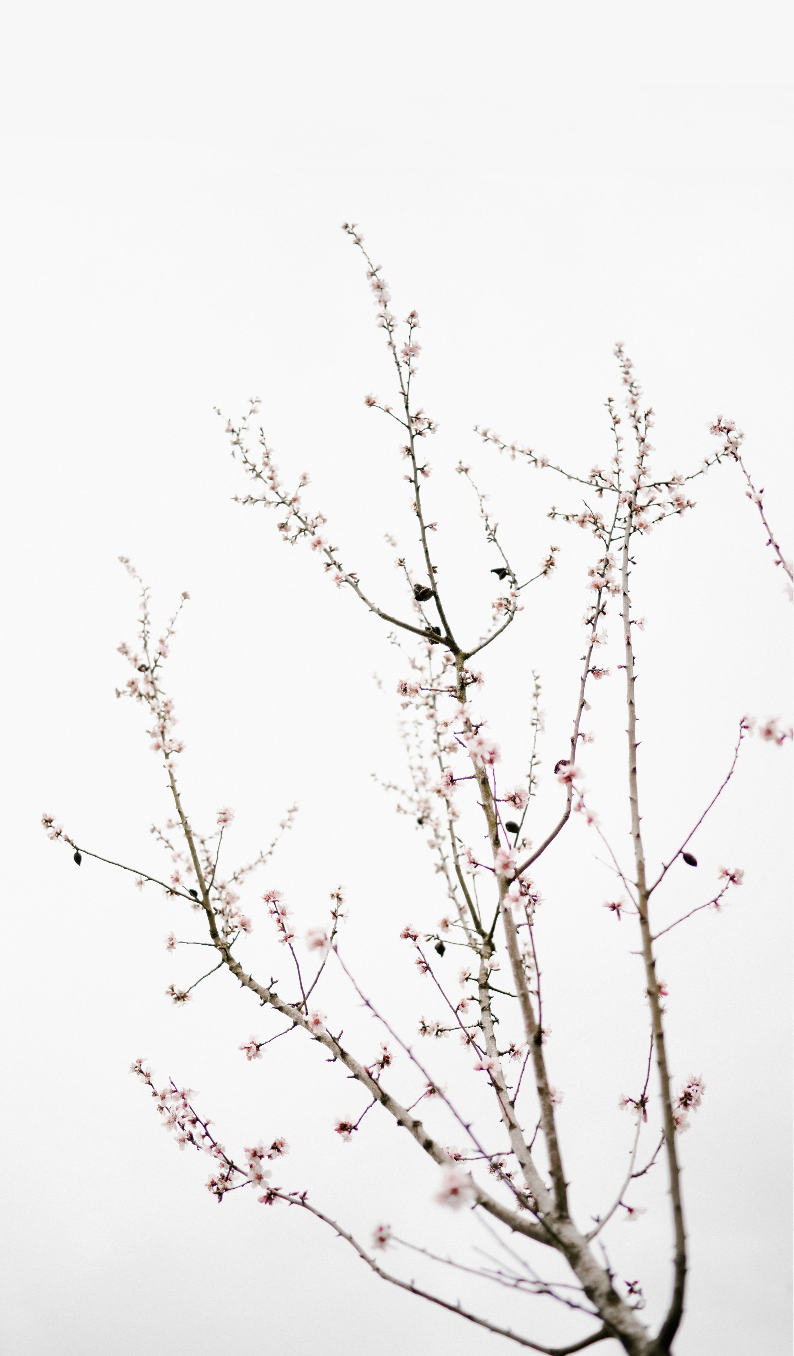 Neutral 100 Best Free Neutral White Minimal And Minimalism Photos On Unsplash Cherry Blossom Wallpaper Minimal Wallpaper Preppy Wallpaper