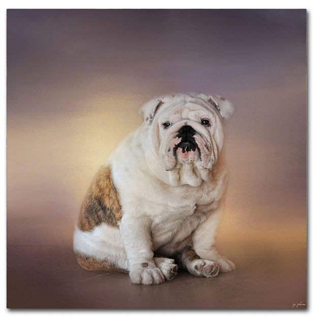 Download Premium Image Of Adorable White Bulldog Puppy Portrait