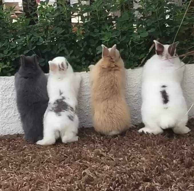 Photo of Four little bunny butts all in a row. (11/30/18) #BunnyButtFriday #Friday #cuteb…