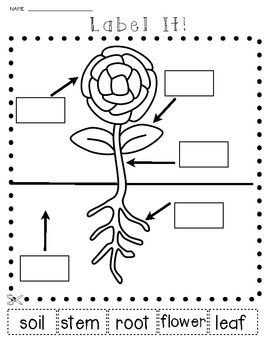 science plants and seeds let 39 s label it cut and paste activities april school plant. Black Bedroom Furniture Sets. Home Design Ideas