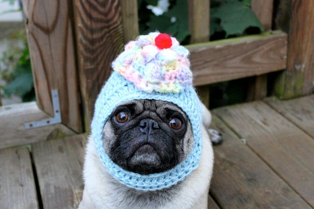 d5508311a9d Pickles the pug models hats that his owner designs and sells for dogs -  must see all of them on Etsy! Hysterical!