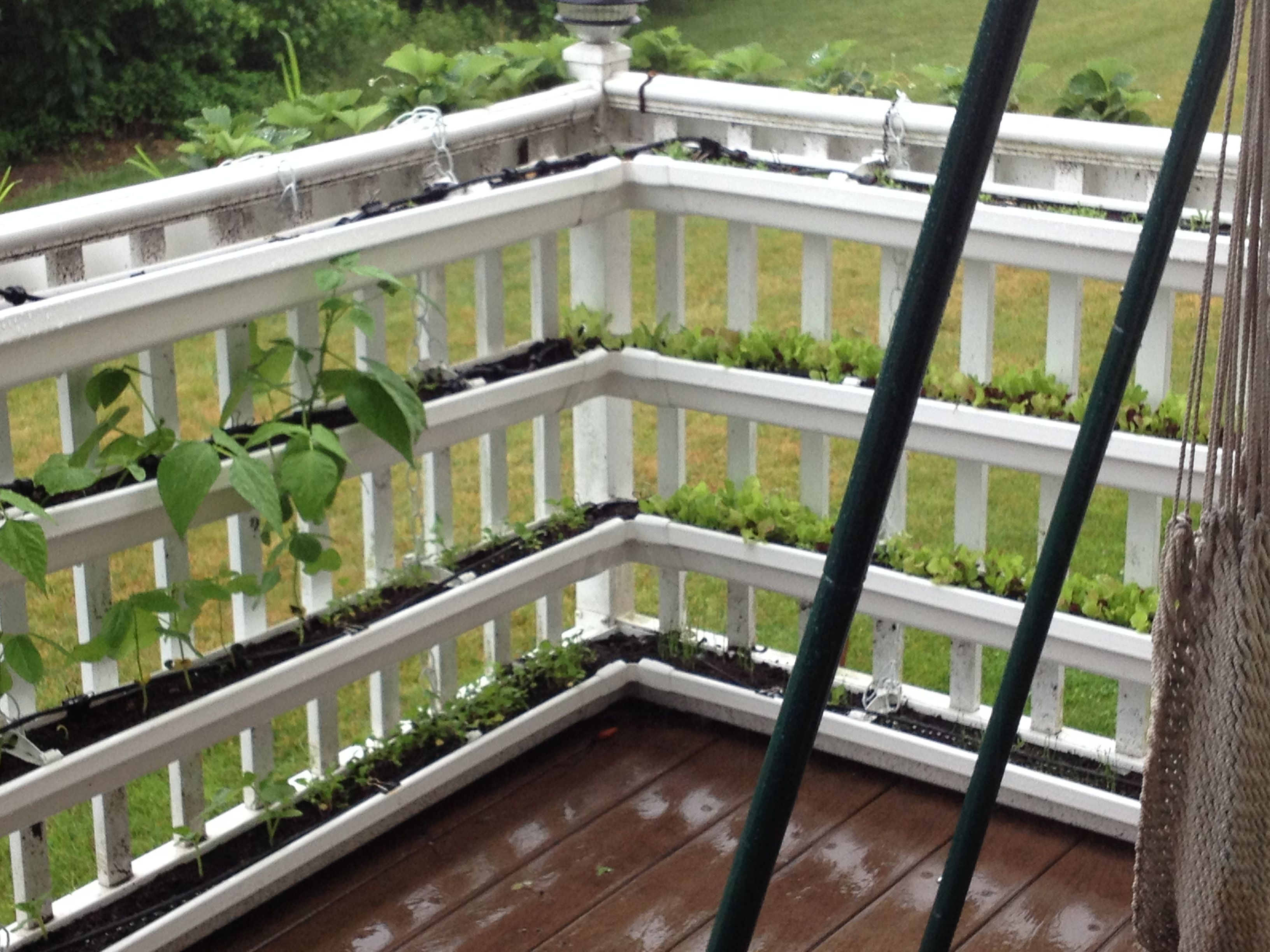 Close up of the balcony gutter garden balcony farming for Balcony vertical garden