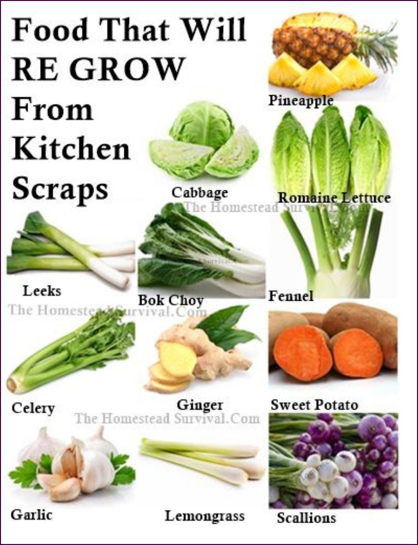 grow food Hydroponika, Rośliny, Ogrody