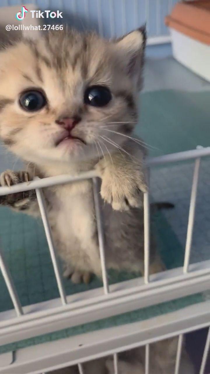Cute Kitten Video Kittens Cutest Cute Kitten Gif Cute Baby Animals