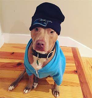 East Cooper S Pets Pets Pet Owners Heartwarming Stories