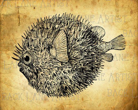 Squid Fish Dictionary Art Print Fishing Sea life Vintage Nautical