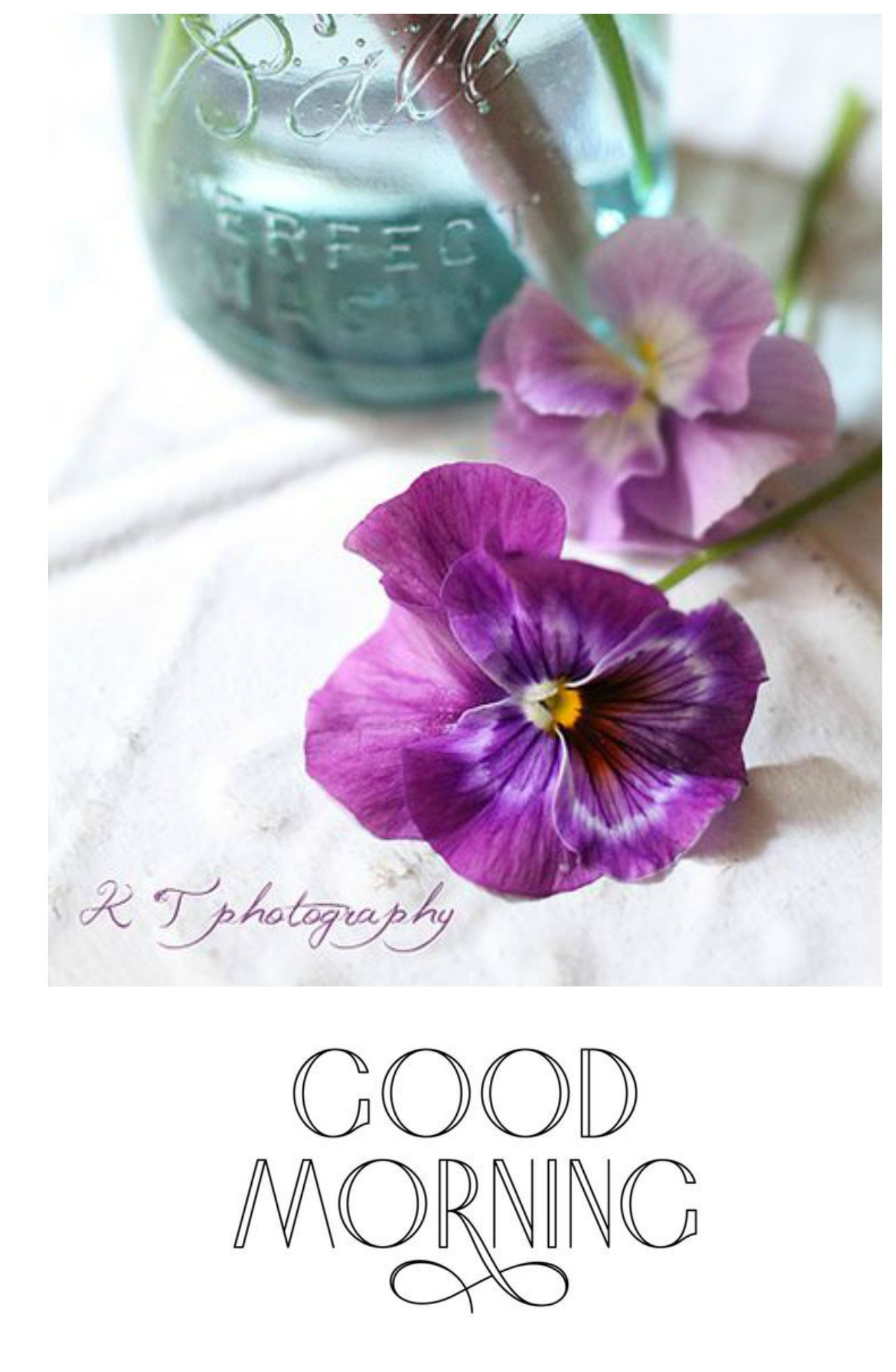 3tina Flowers And Quotes Pinterest Pansies Flowers And