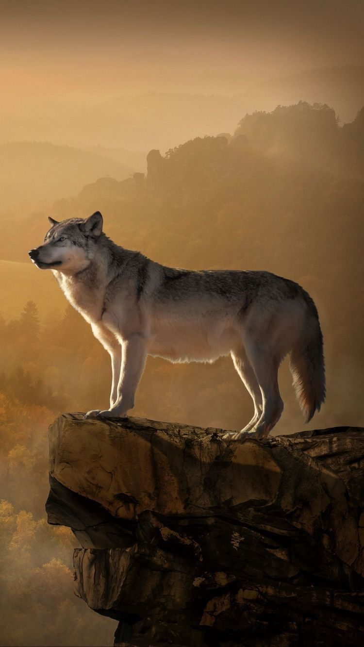 Wolf aliya Aliya Wolf