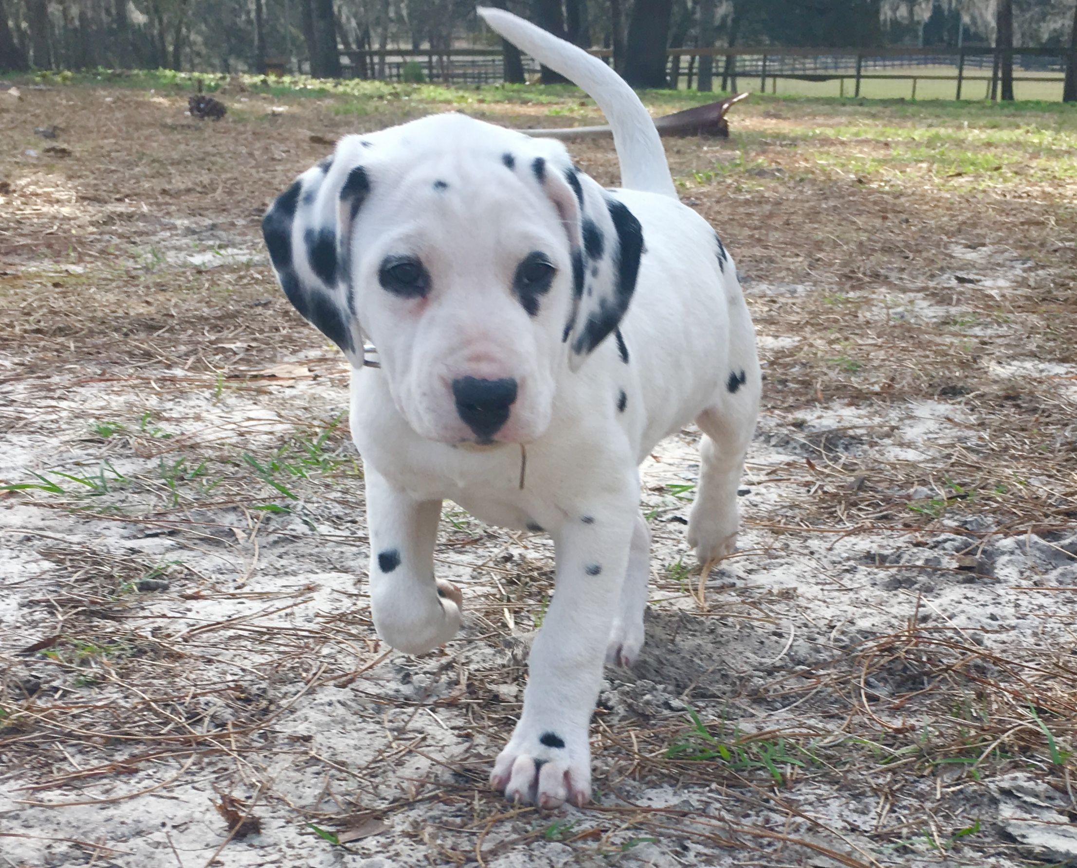 Pin by Penny Cuaron on Dalmatians Cute baby animals