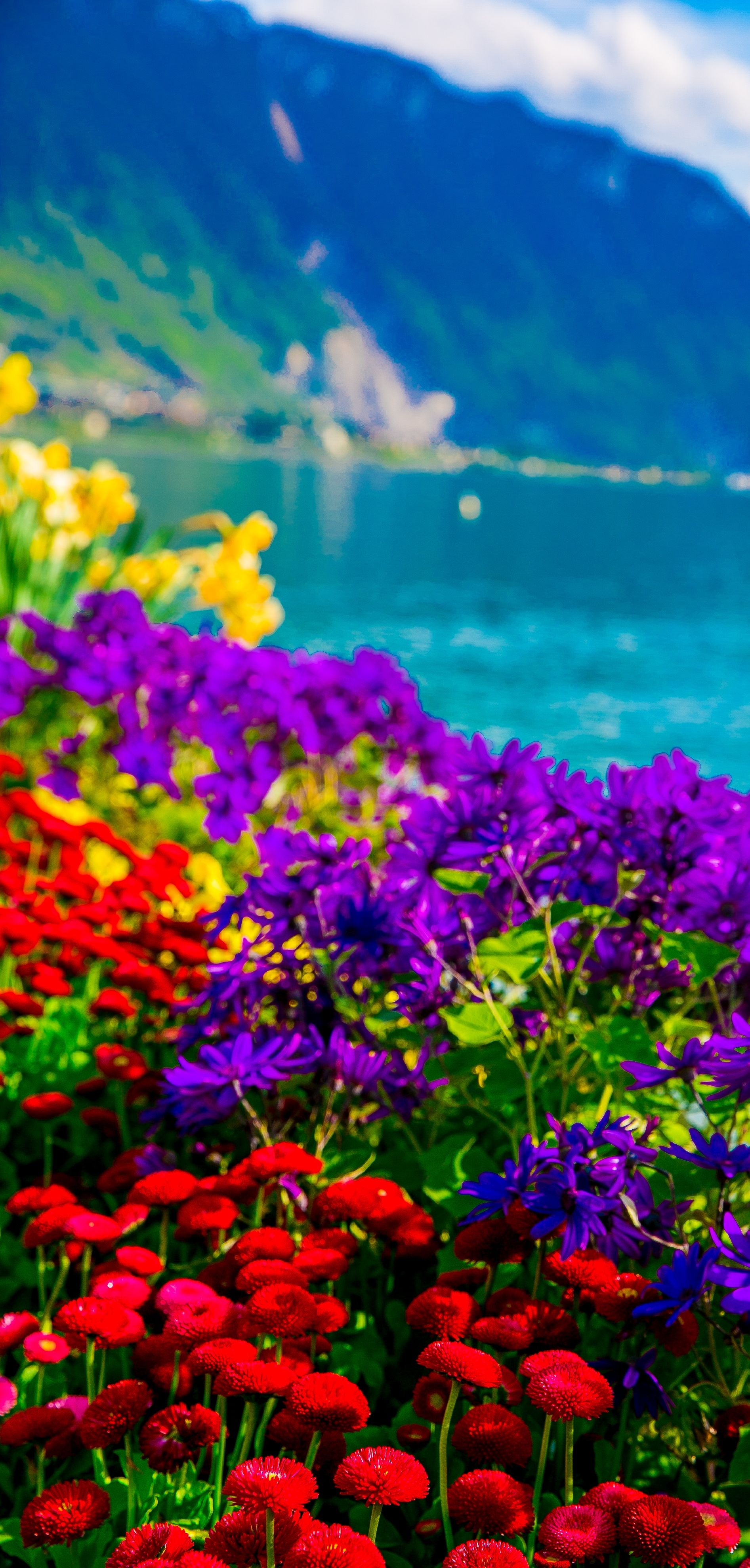 Flowers on Lake Geneva, with Swiss Alps, Montreux
