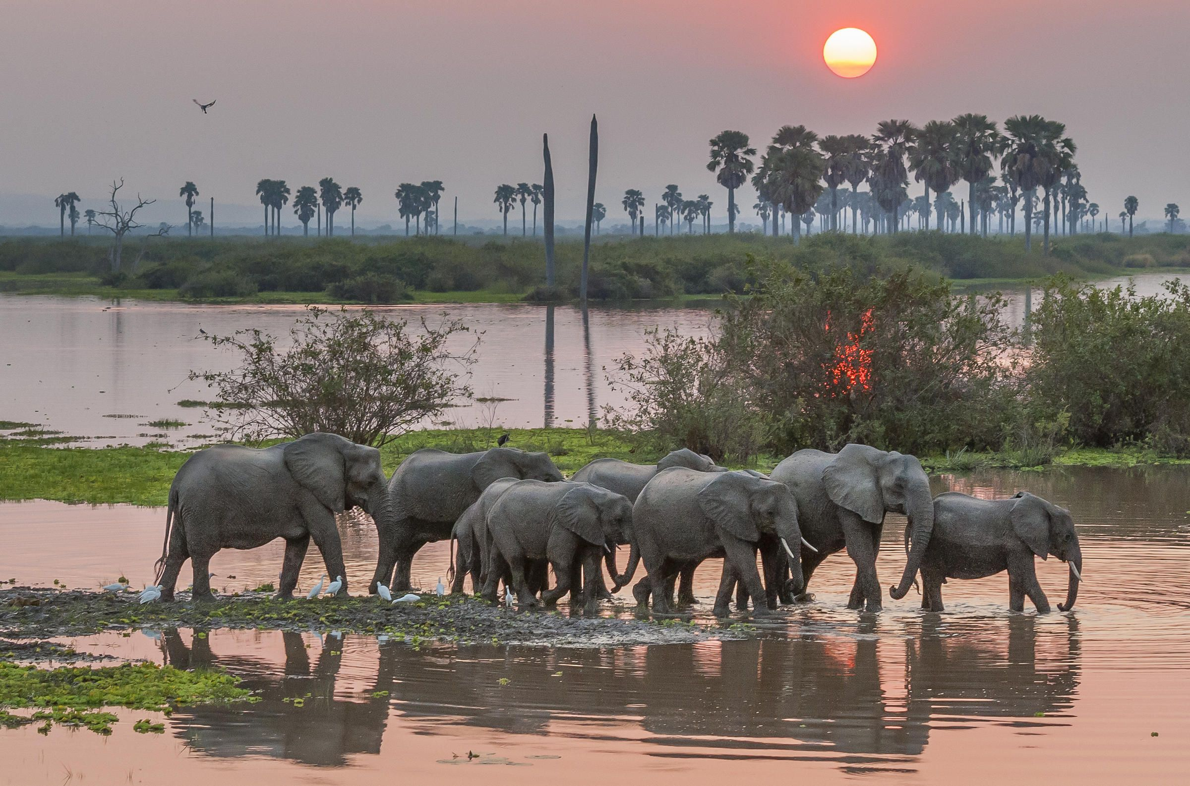 Image result for robert ross elephant photography selous