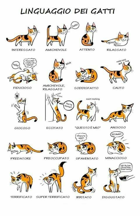 Decipher Your Cat S Body Language With This Helpful Infographic Cat Language Cat Body Cute Cats
