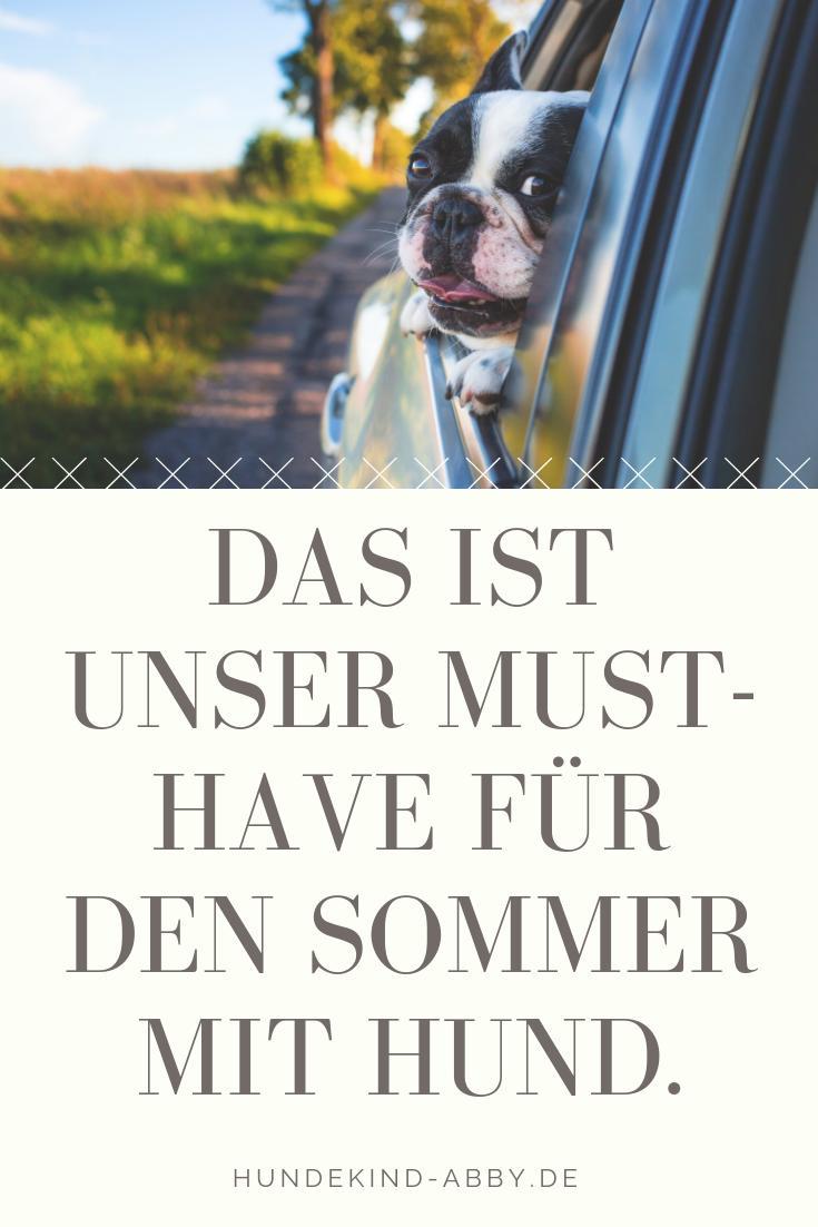 Anzeige Hunde Welpen Und Hund Unterwegs