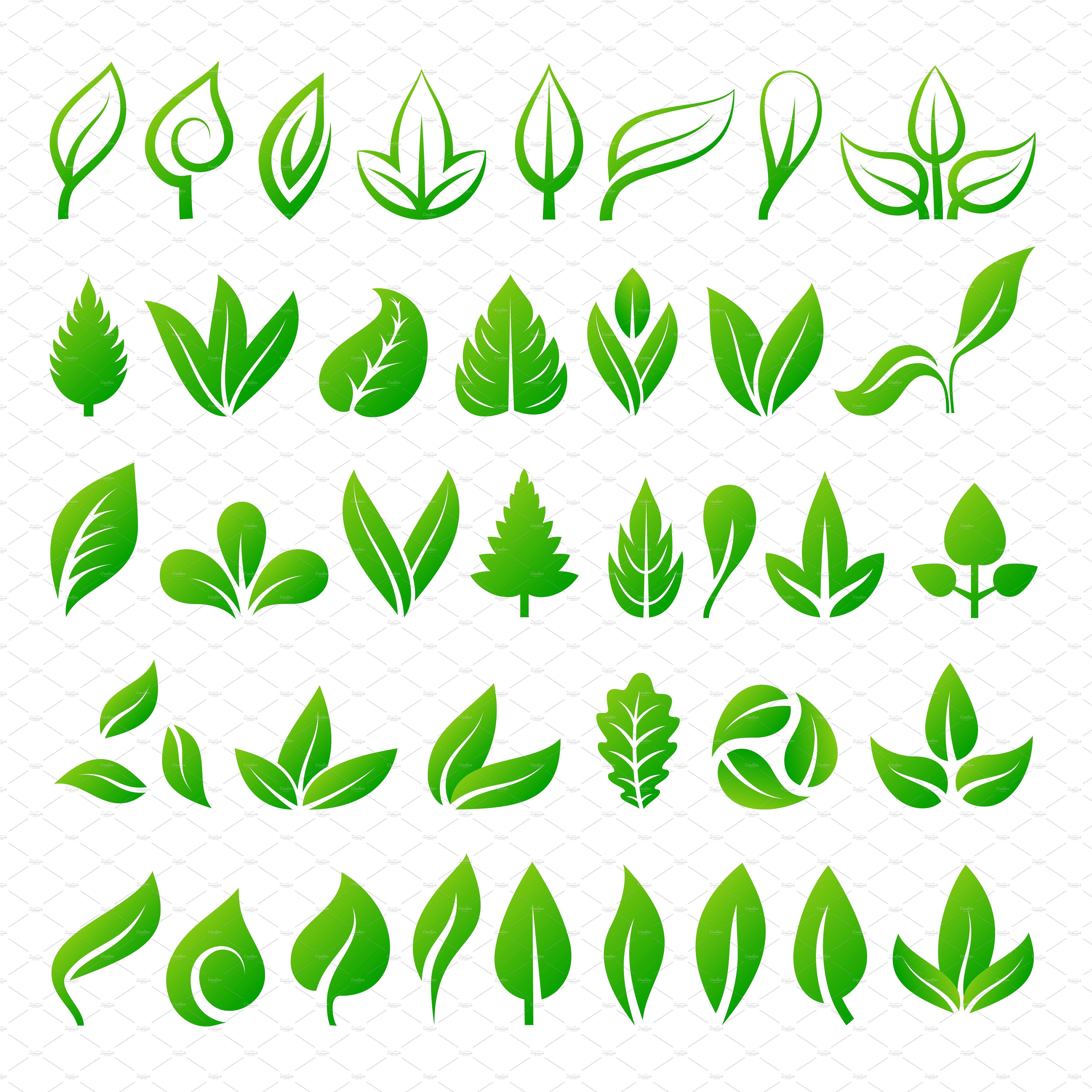 Leaf Icons Vector Illustration Tree Logo Design Leaf Illustration Tea Leaves Illustration