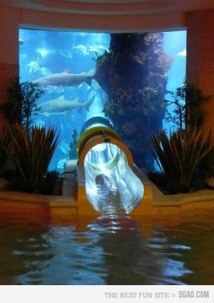 Shark tank water slide at Golden Nugget hotel in Vegas