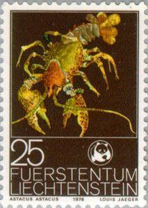 Noble Crayfish (Astacus astacus)