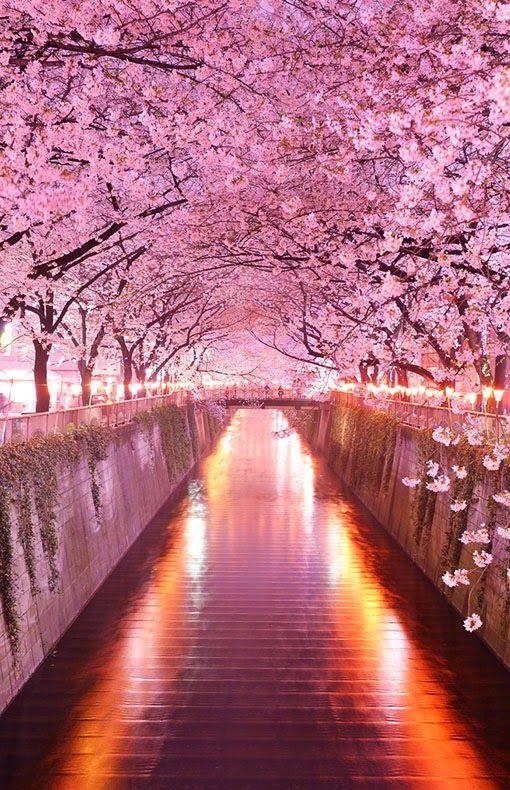 Wisteria Flower Tunnel in Tochigi, Japan