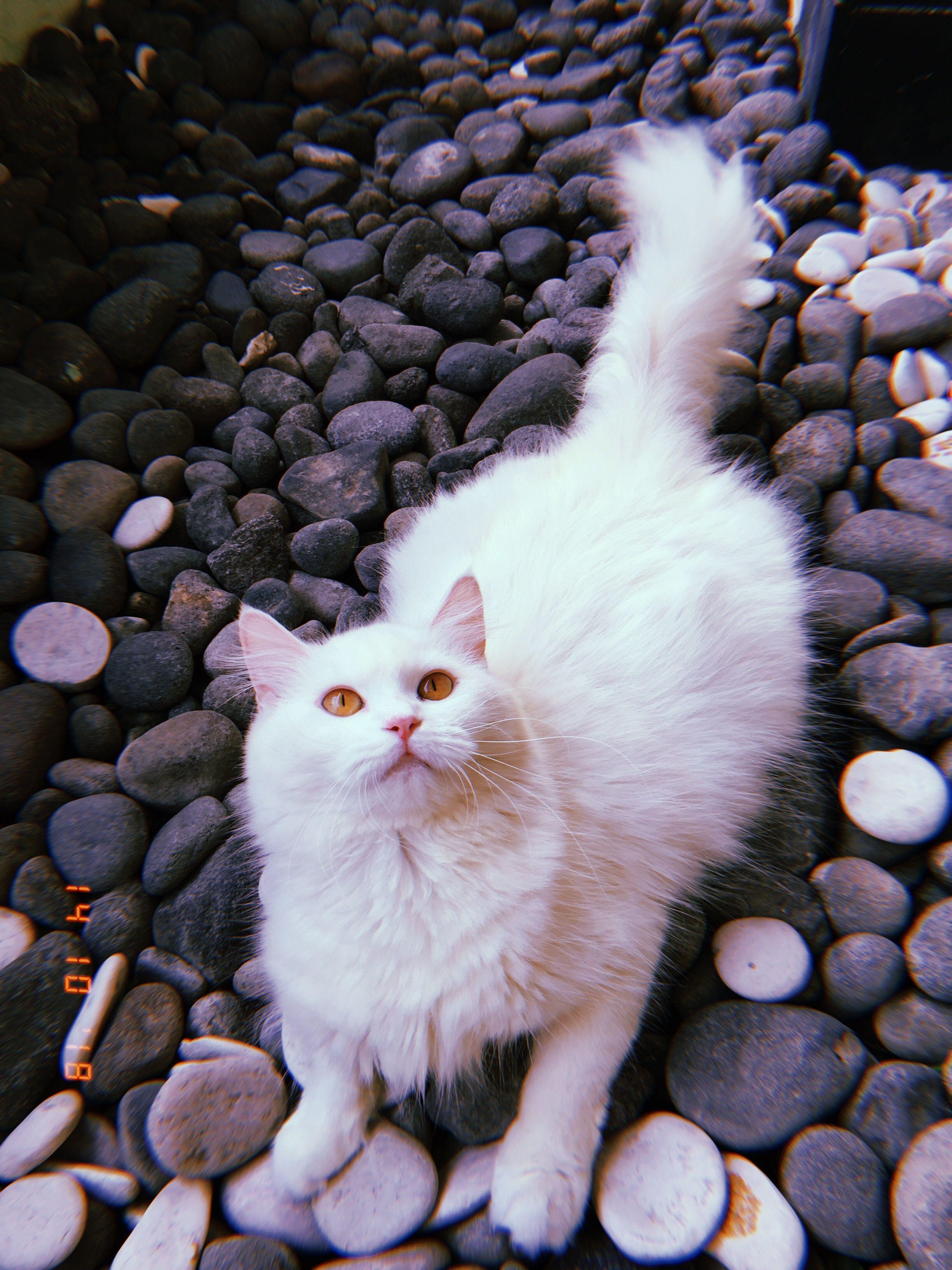 Pin Oleh Angela Benna Di Sweet Cats Di 2020 Binatang Binatang Lucu Kucing Cantik