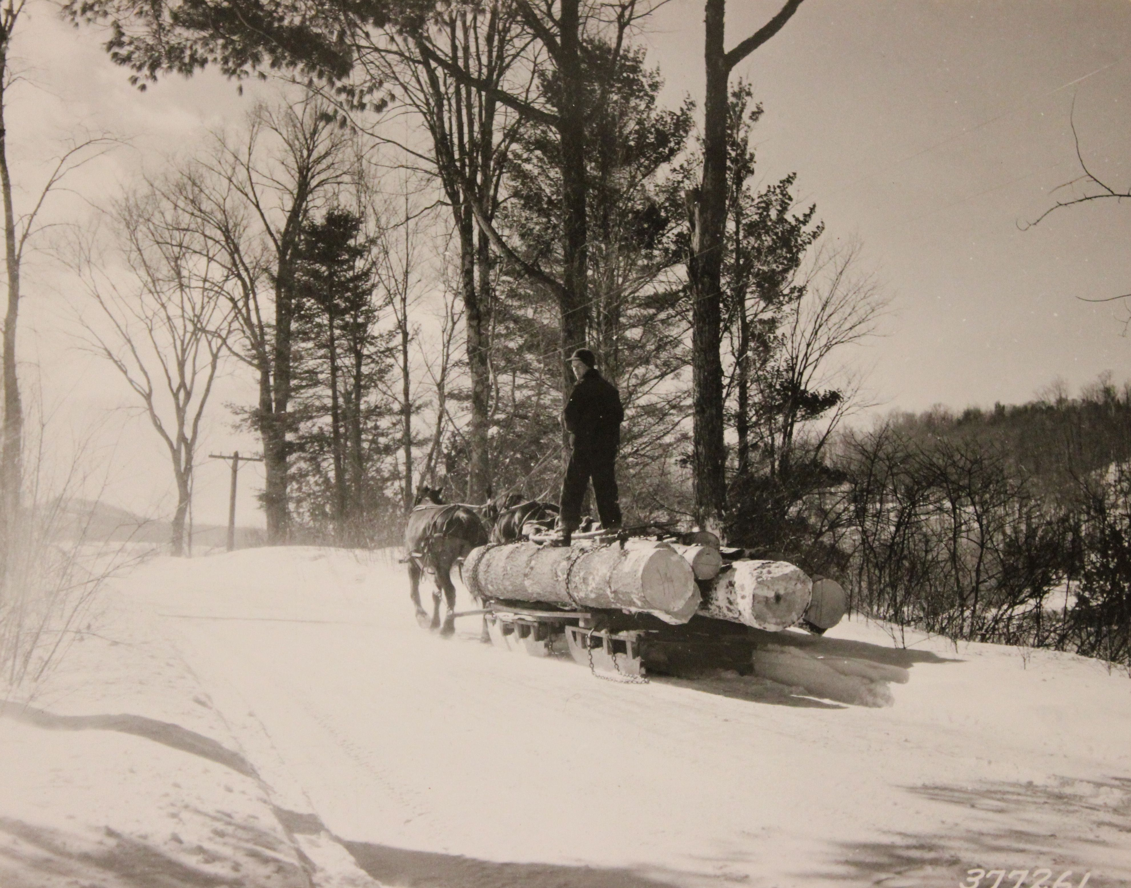 horse drawn sled images HorseDrawn Sled Hauling Logs in