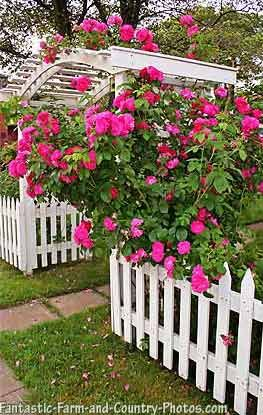 Fantastic Country Garden Pictures And Photos Rose Garden Design Cottage Garden Garden Pictures