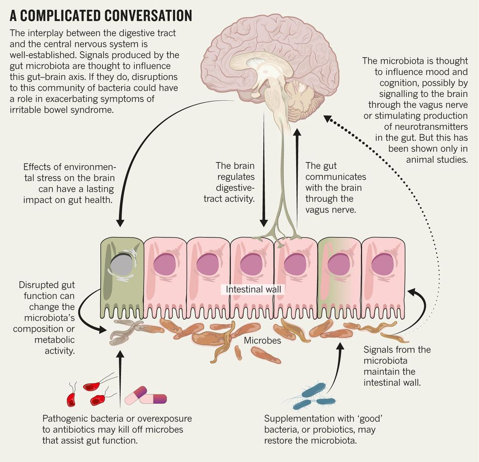 : Microbiome: Bacterial broadband : Nature : Nature Publishing Group