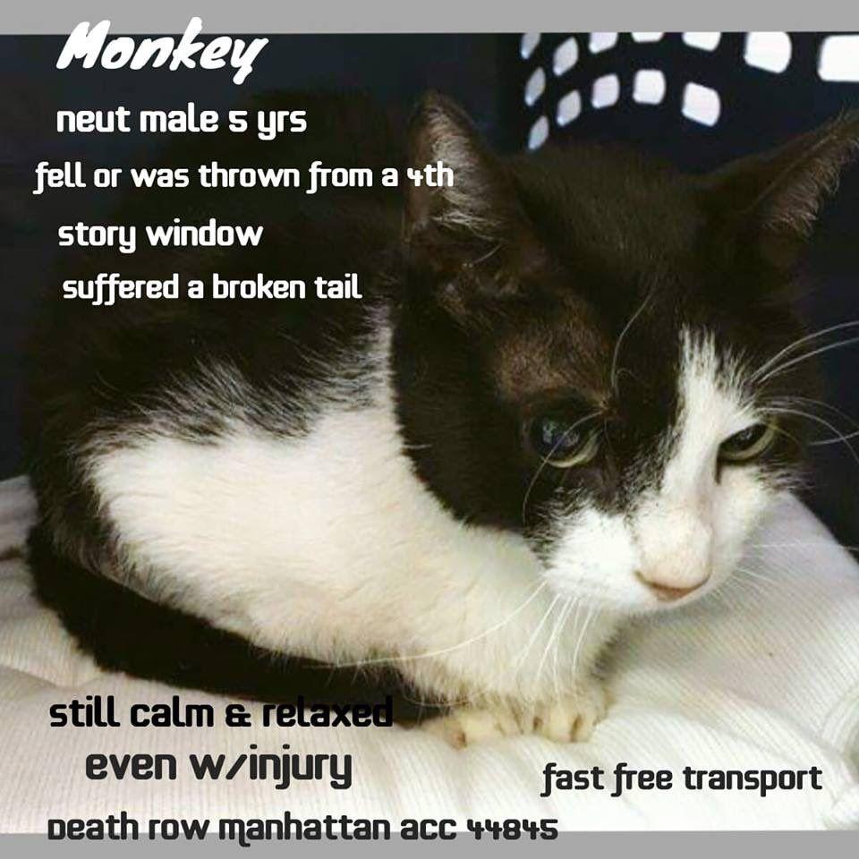 Catsrangels2 On Twitter Cats Cat Adoption New York Animals