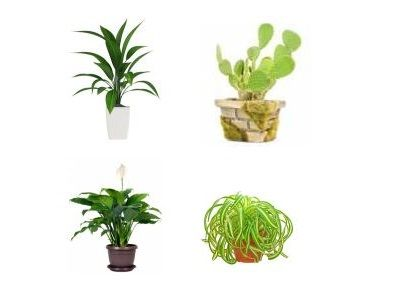 low light and easy to growcare indore plants i love potting