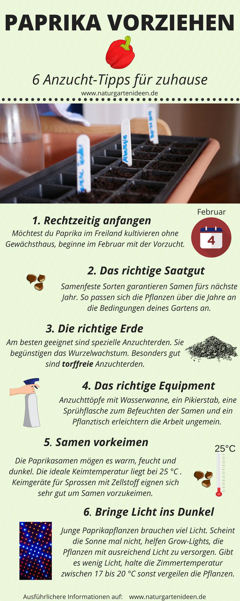 Paprika vorziehen - 6 Tipps für die Anzucht von Paprika #anbauvongemüse