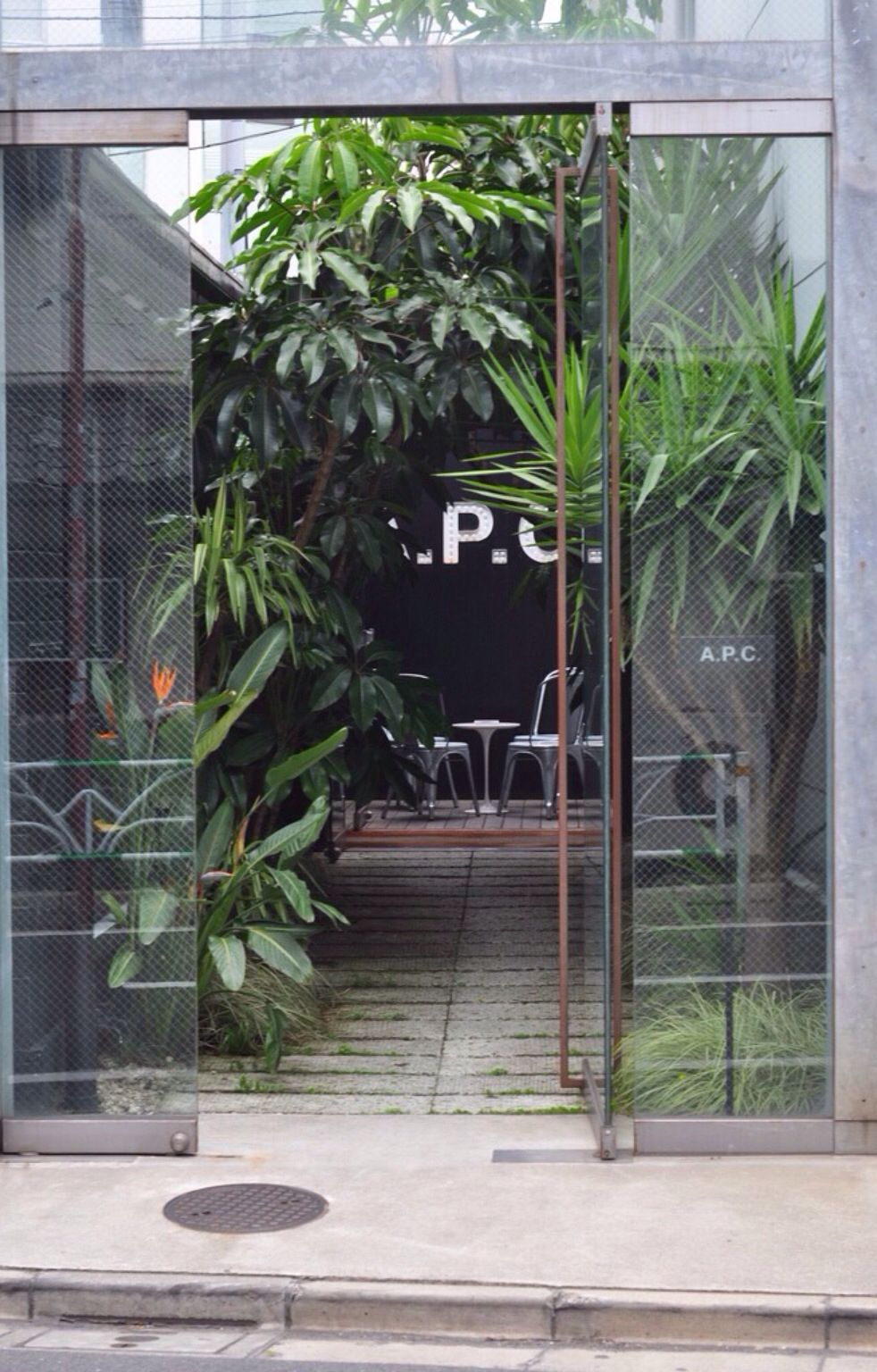 Pinterest Oopssydney Pinterest Plants Flowers And Gardens
