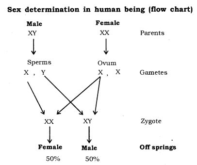 Heredity And Evolution Class 10 Notes Science Chapter 9 Biology