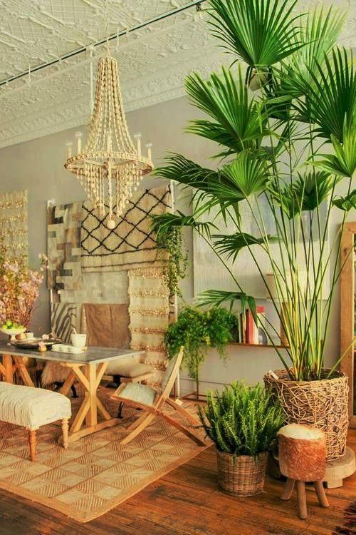 Photo The Shiny Squirrel My Samoan Home Tropical Home Decor