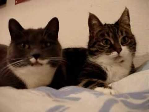 Miau Zu Zweit Youtube Crazy Cats Cute Cats Cute Animals
