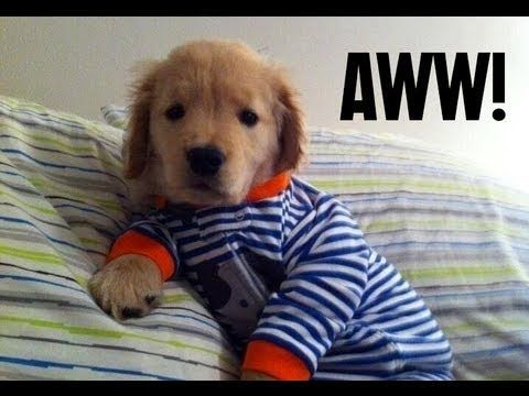 Sunday Morning Chill Https Ift Tt 2h14awr Puppies In Pajamas