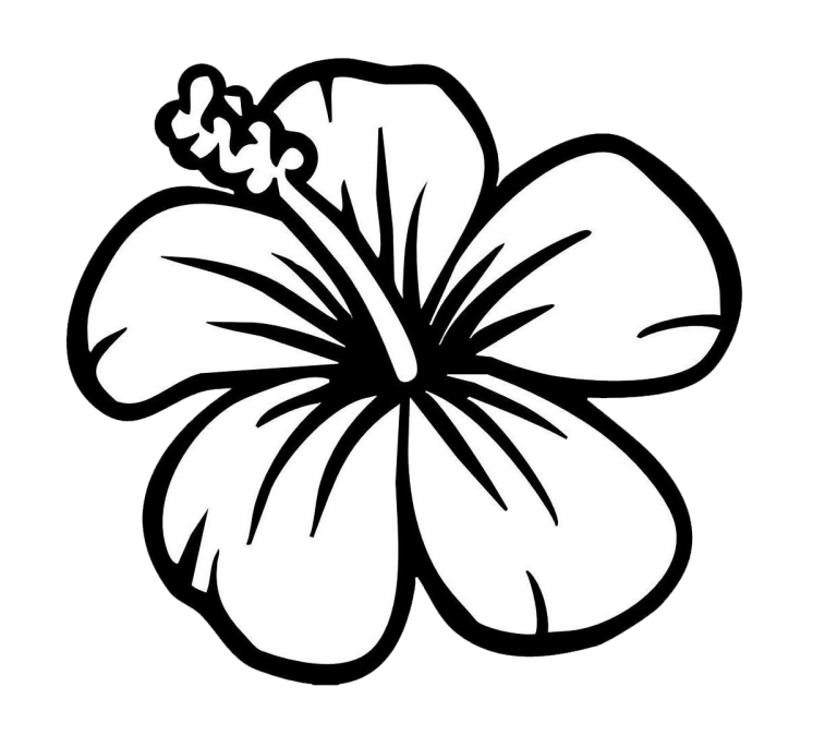 999 Flower Clipart Black And White Free Download Cloud Clipart Hawaiian Flower Drawing Hibiscus Drawing Easy Flower Drawings