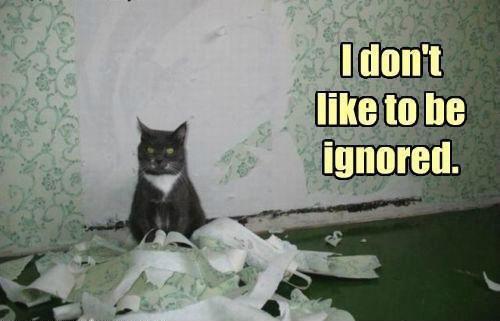 Do not upset the cat :)